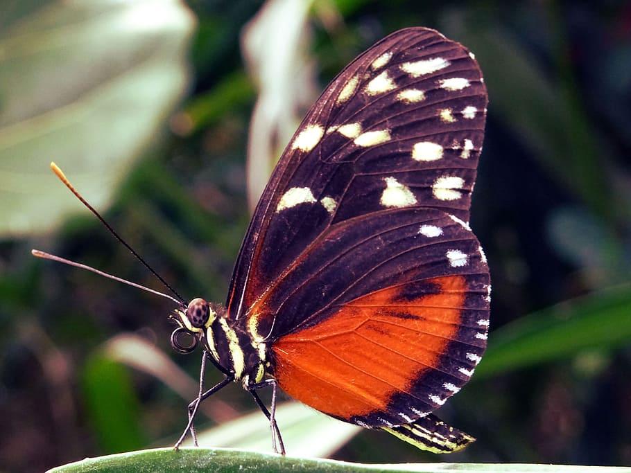 Nature, Summer, Garden, Animal, Antenna, Beautiful, - Photography , HD Wallpaper & Backgrounds