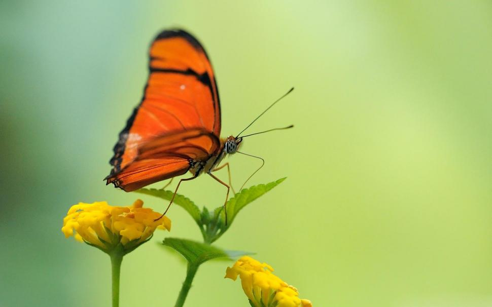 Beautiful Butterfly Wallpaper,animals Hd Wallpaper,green - Ye Kamyabian Ye Izzat Ye Naam Tumse Hai , HD Wallpaper & Backgrounds