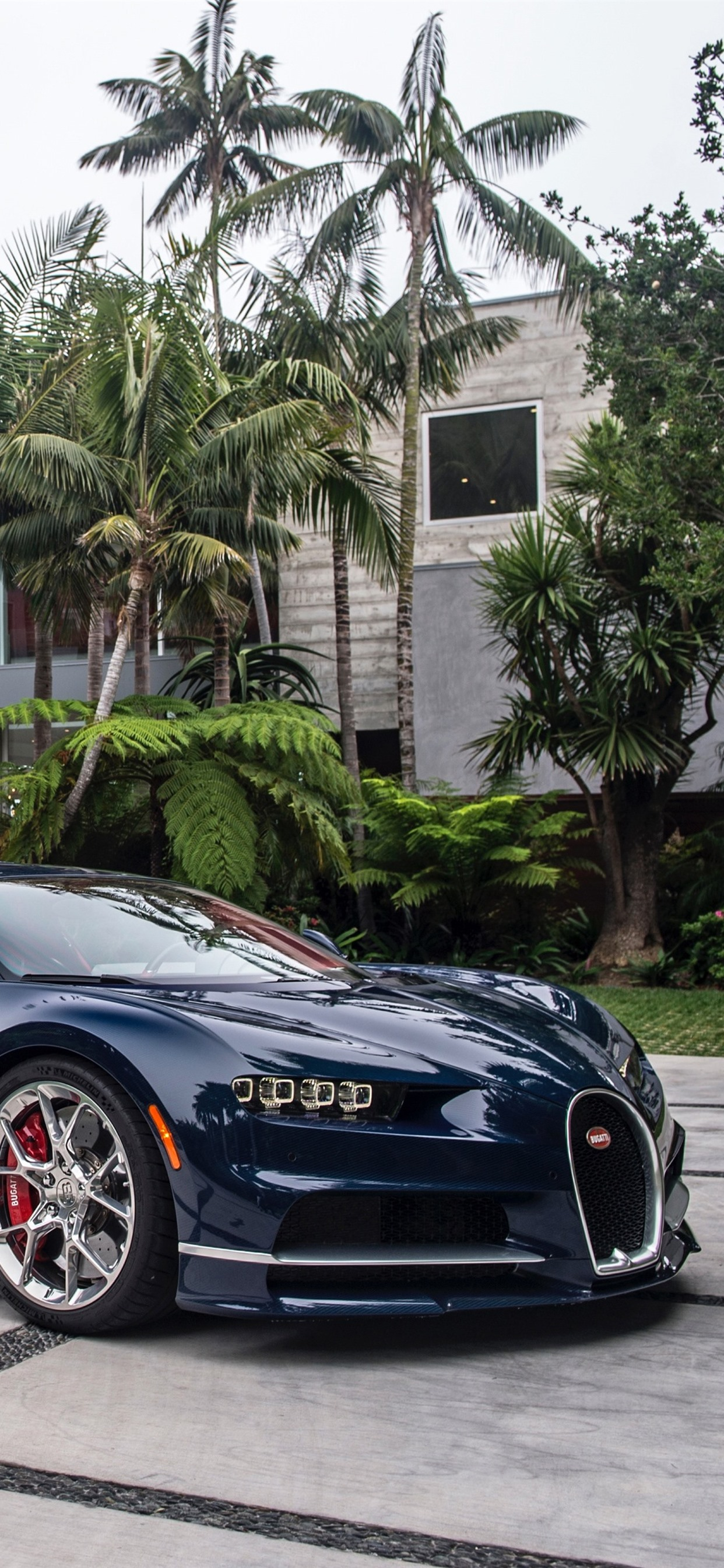 Iphone Wallpaper Bugatti Blue Supercar Palm Trees Bugatti Chiron Wallpaper 4k 2570483 Hd Wallpaper Backgrounds Download