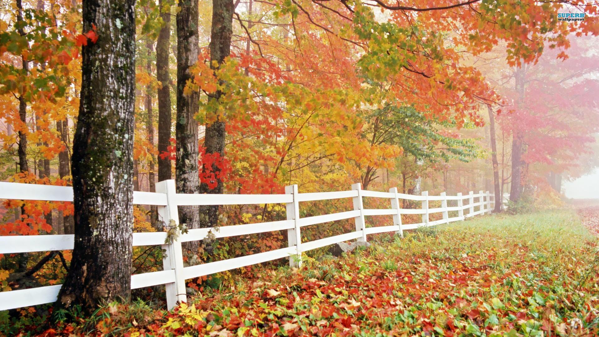 Nature Wallpaper Autumn Free 1 Desktop Wallpapers Hd Windows 10 Wallpaper Hd Autumn 261294 Hd Wallpaper Backgrounds Download