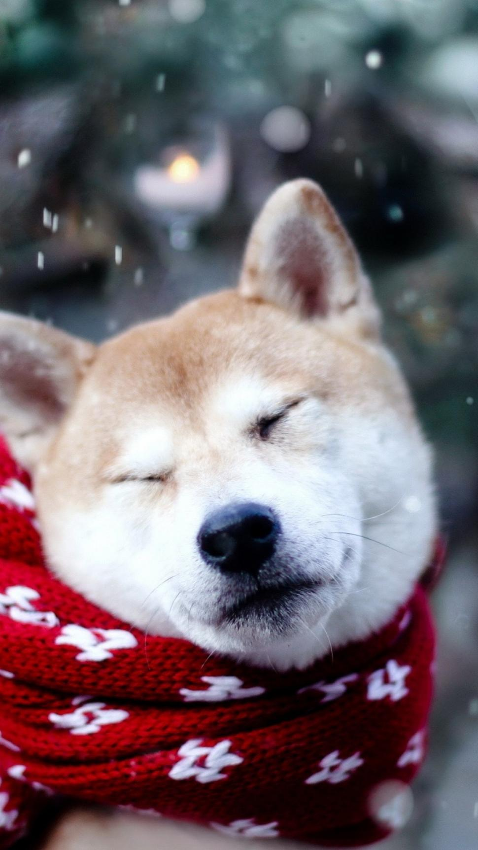 Dog Shiba Inu Sleeping Wallpaper Shiba Inu Wallpaper Iphone 6 262825 Hd Wallpaper Backgrounds Download