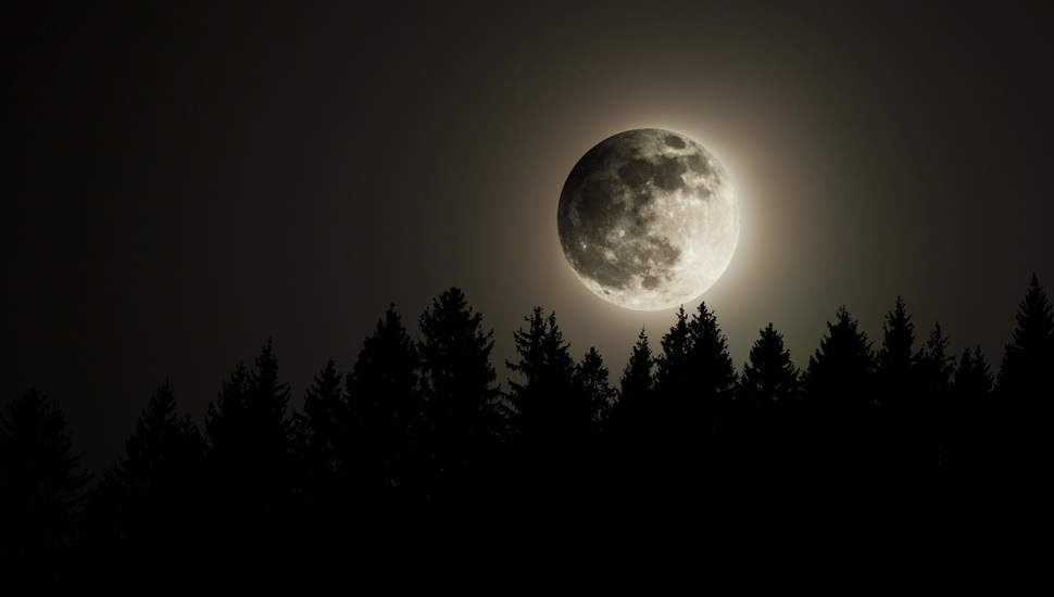 The Full Moon, The Sky, Night, Forest, The Moon Desktop - Full Moon , HD Wallpaper & Backgrounds