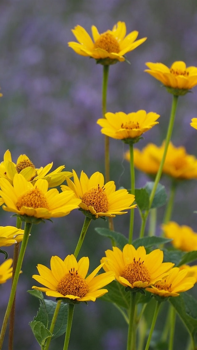 Yellow Flowers Wallpaper Iphone , HD Wallpaper & Backgrounds