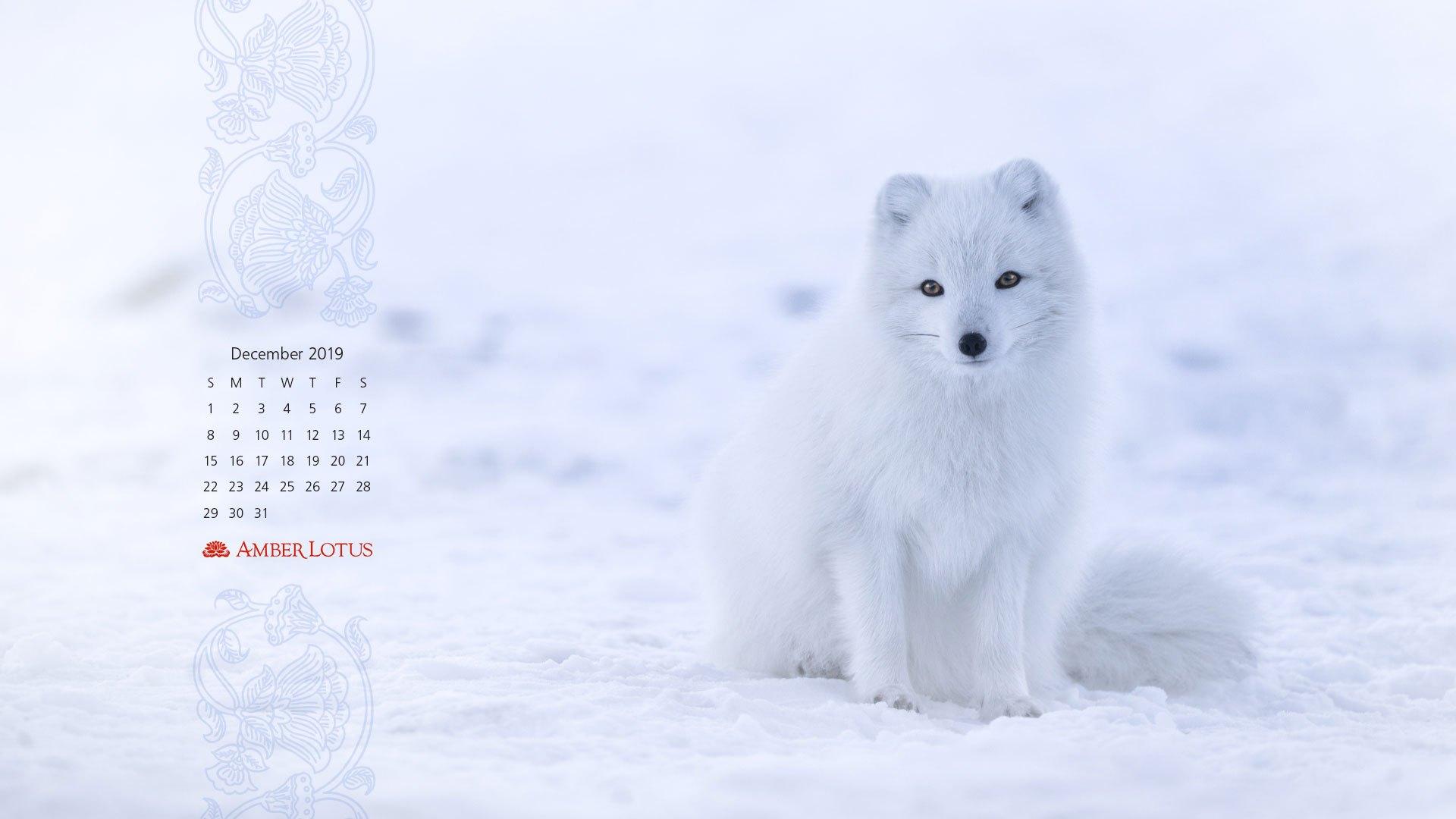 Arctic Fox , HD Wallpaper & Backgrounds