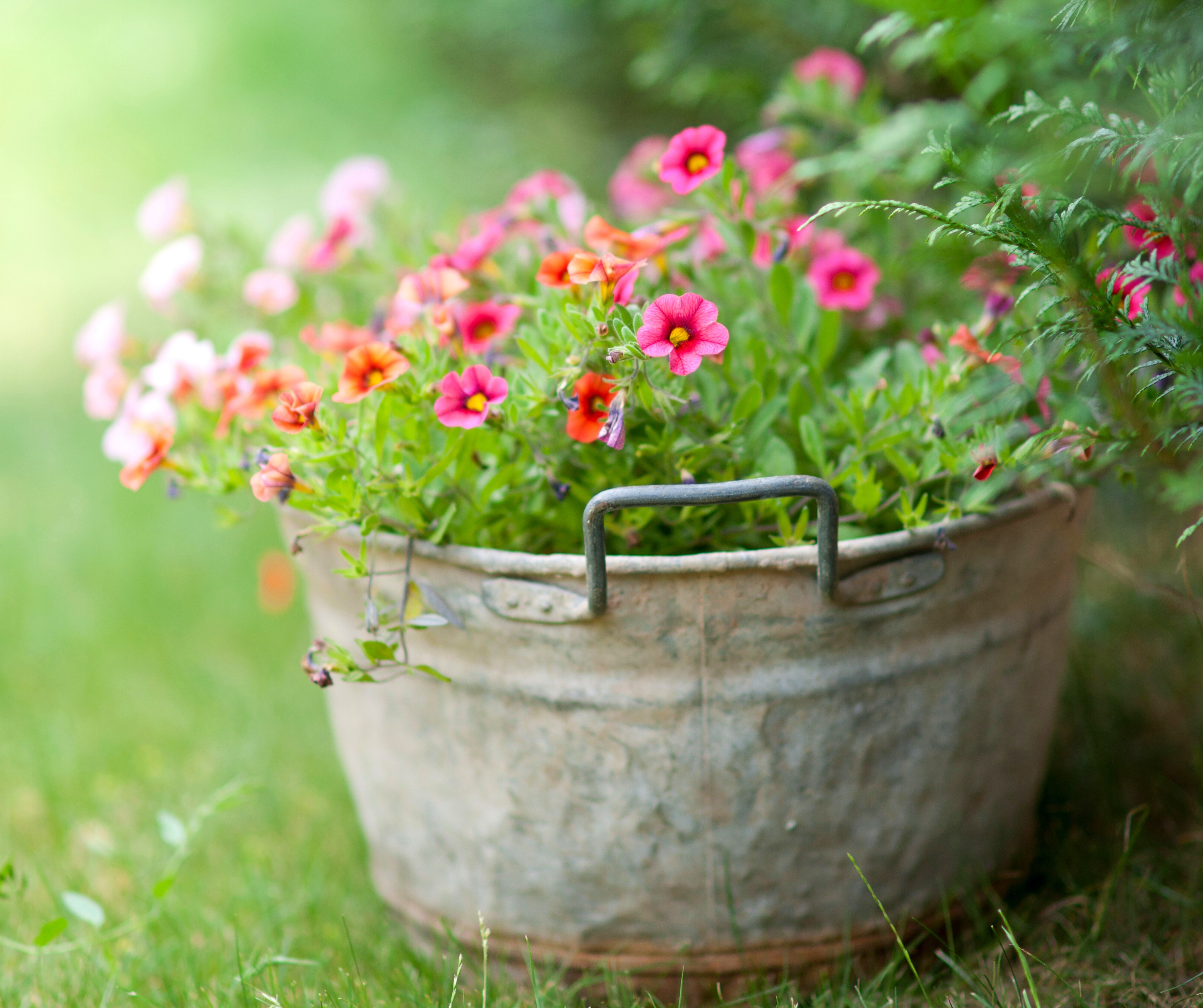 Fresh Spring Flowers Color Grass Harmony Nature Beautiful Flower
