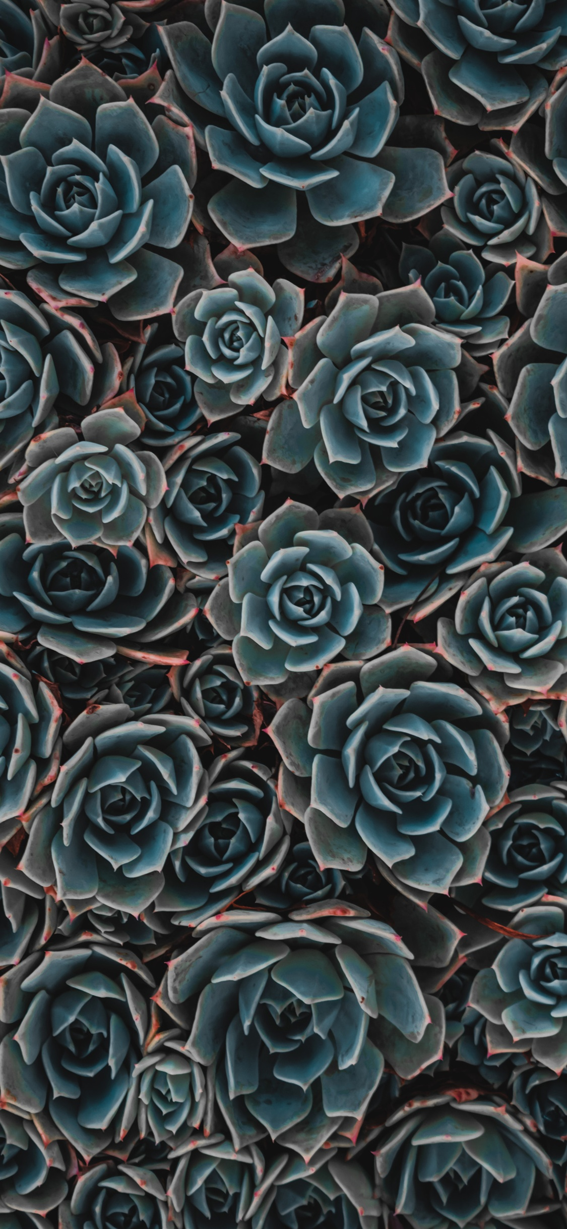Succulent Wallpaper Iphone X 2623966 Hd Wallpaper Backgrounds Download