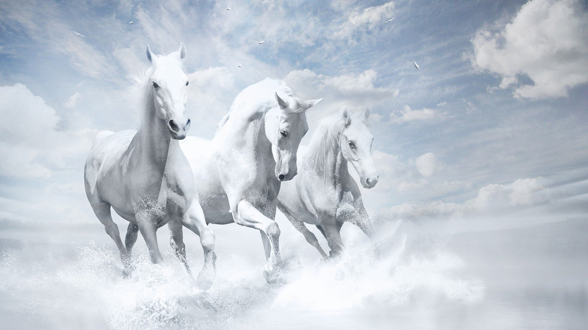 White Horses Hd White Horse Images Hd 281622 Hd Wallpaper