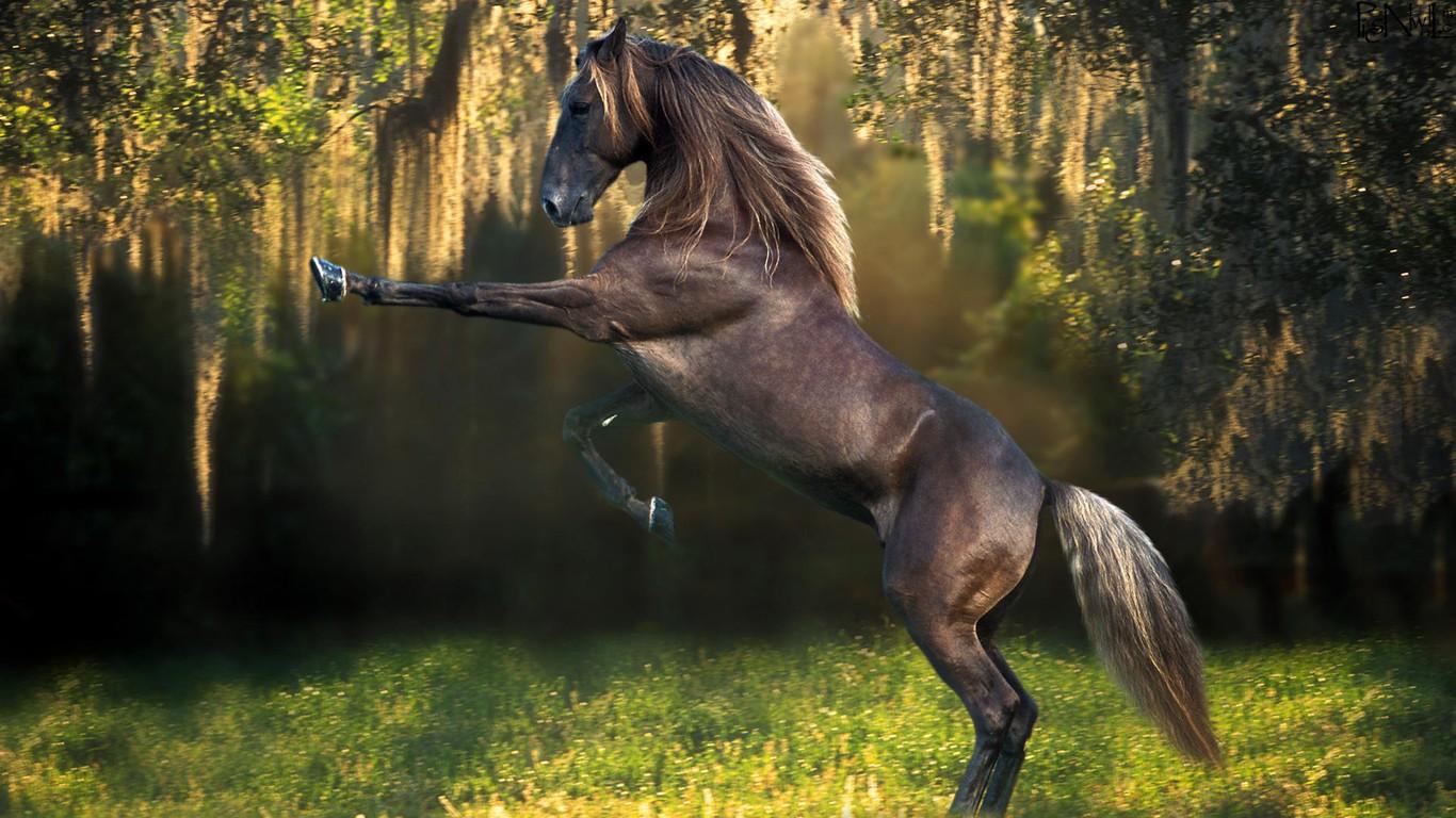 Black Horse Hd Hd Desktop Backgrounds Horses 282230 Hd Wallpaper Backgrounds Download
