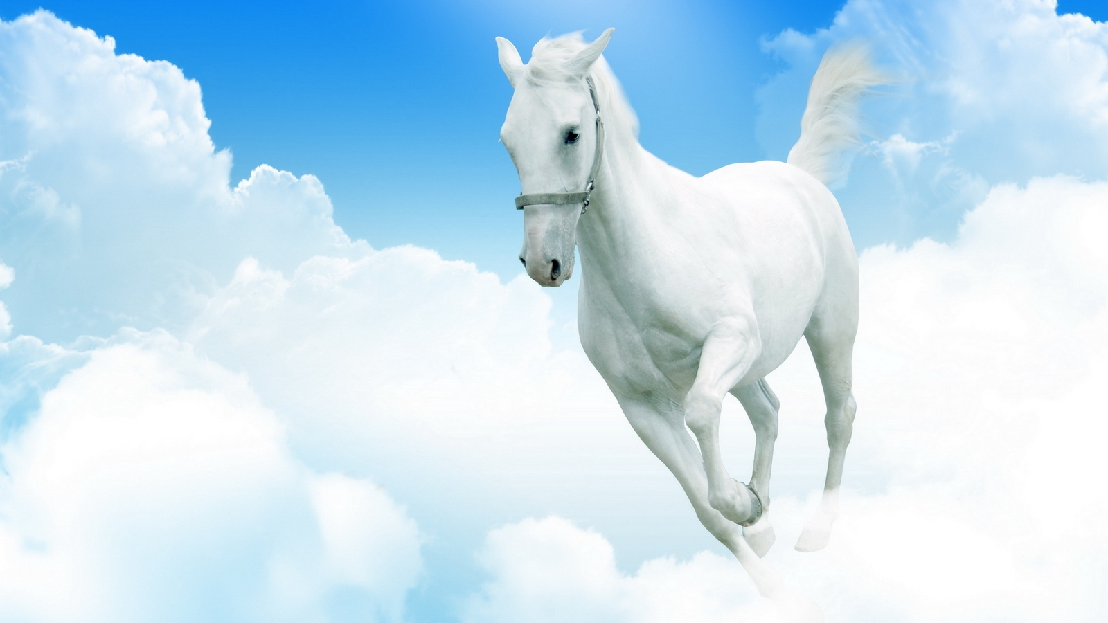 Wallpaper White Horse Clouds Jumping White Horse Wallpaper Hd 282388 Hd Wallpaper Backgrounds Download