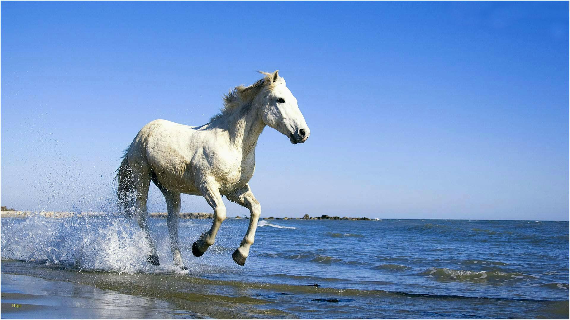 Horse Wallpaper Best Of Horses Hd Wallpapers Horse - Full Hd Wallpaper Download For Windows 7 , HD Wallpaper & Backgrounds