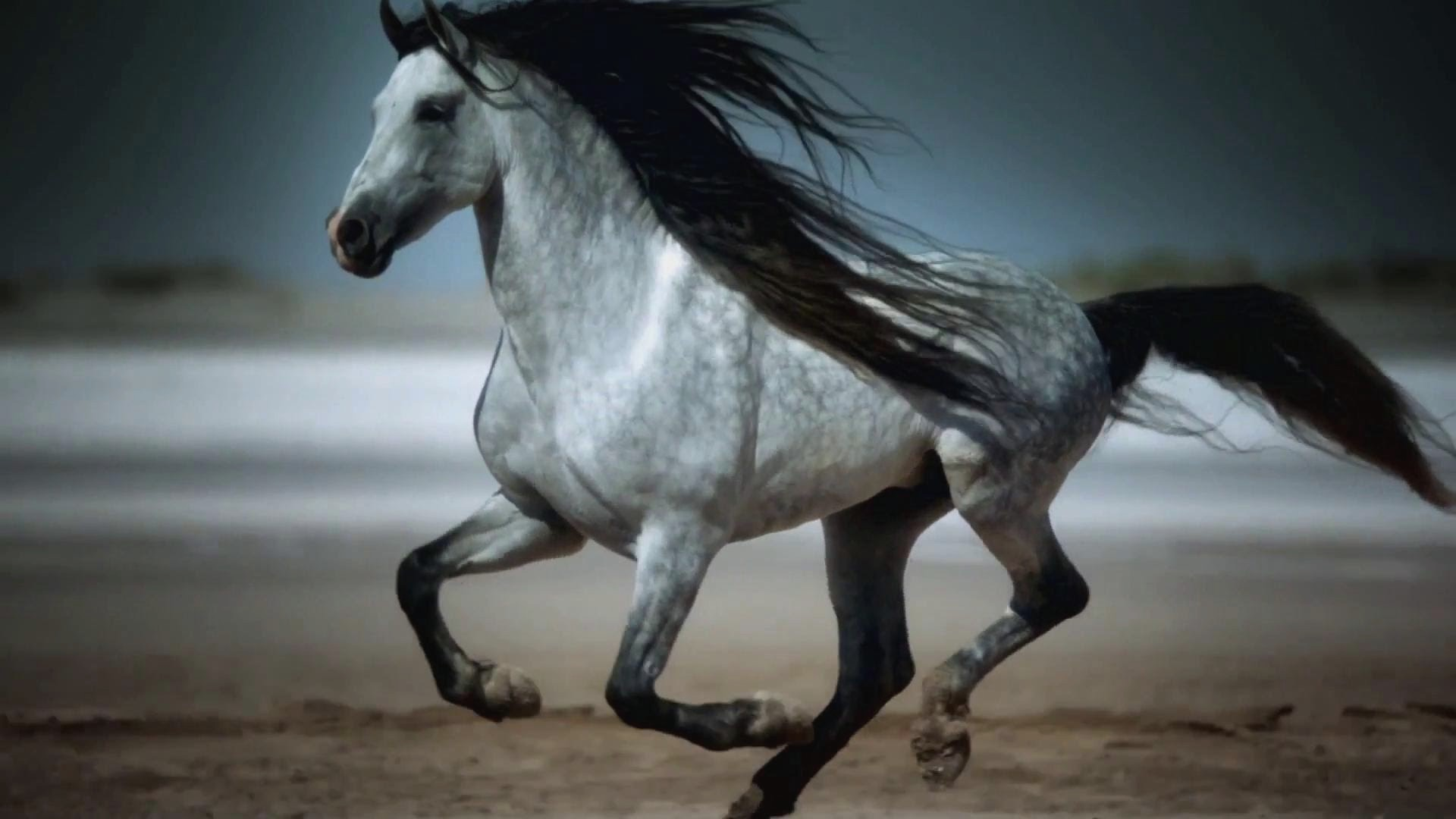 Horse New Wallpapers Beautiful Horse Galloping 282791 Hd Wallpaper Backgrounds Download