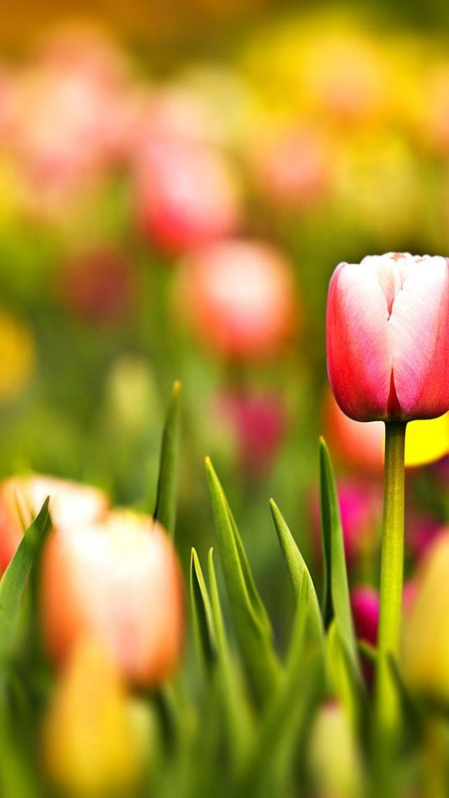 Обои Весна На Айфон 5 , HD Wallpaper & Backgrounds
