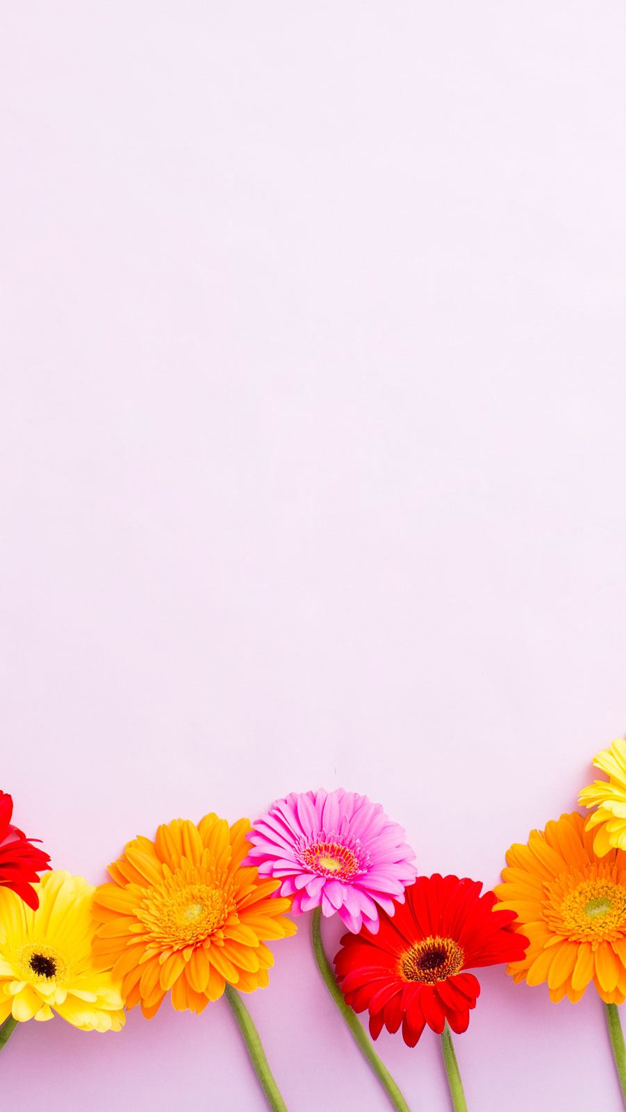 Download Flowers Raising The Roof - Inspirational Get Well Soon Quotes , HD Wallpaper & Backgrounds