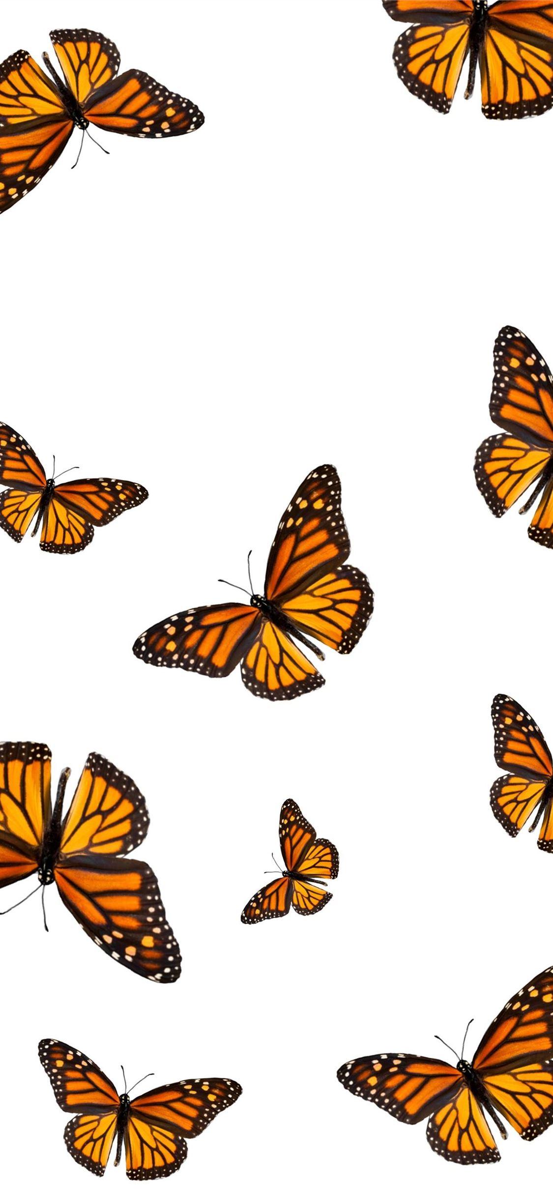 Butterfly Wallpaper Iphone 11 2837592 Hd Wallpaper Backgrounds Download