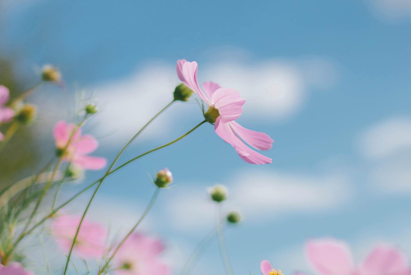 Beautiful Scene Natural Flower Beautiful Scenery , HD Wallpaper & Backgrounds