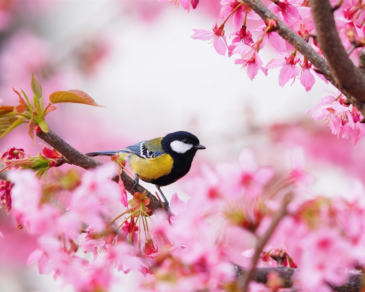Birds In Trees Flowers , HD Wallpaper & Backgrounds