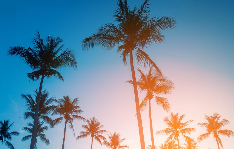 Photo Wallpaper Beach, Summer, The Sky, Sunset, Palm - Tropical Summer , HD Wallpaper & Backgrounds
