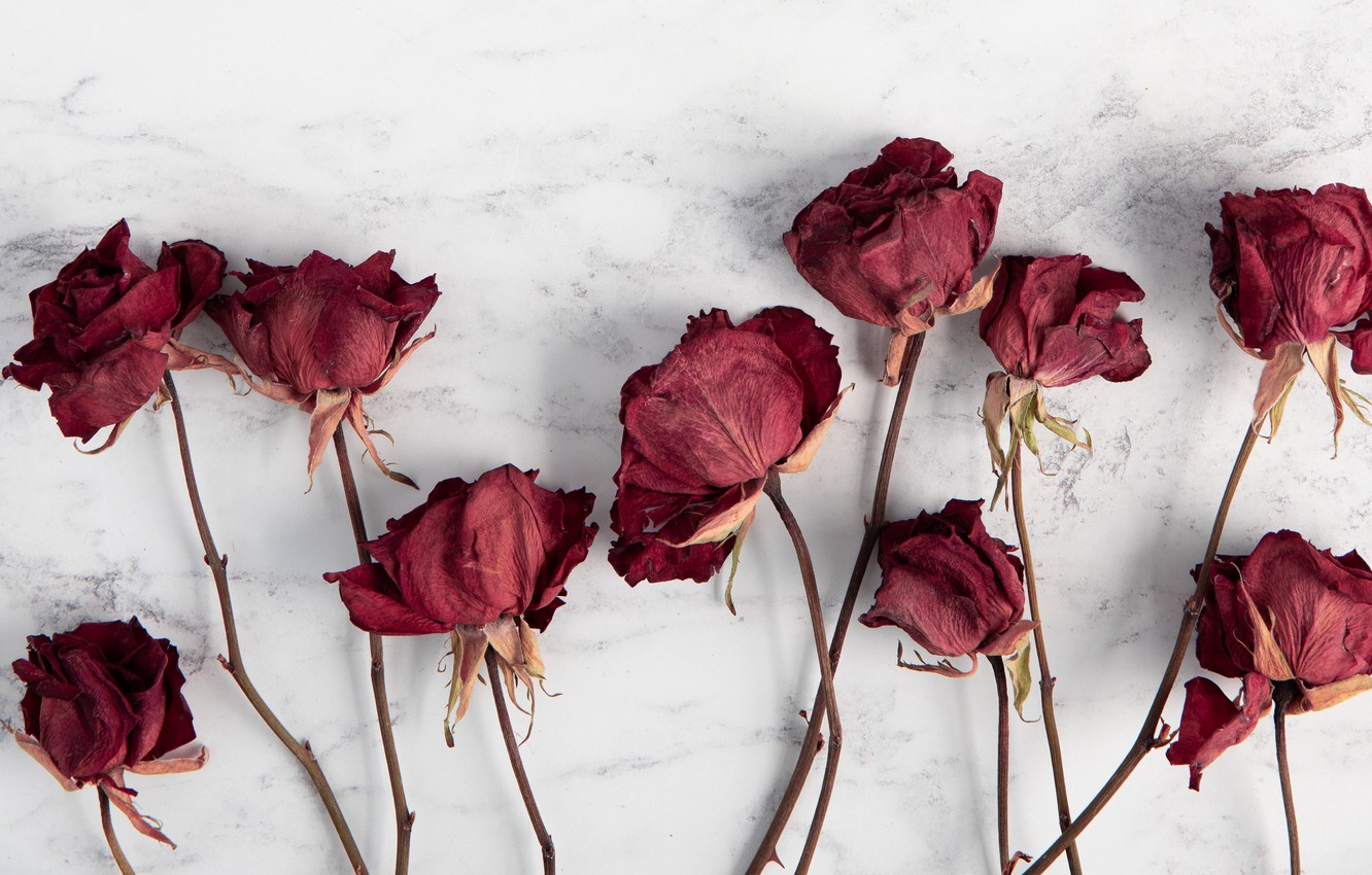 Photo Wallpaper Wallpaper Red Flowers Blur Roses Iphone 11 Pro Flower 2843587 Hd Wallpaper Backgrounds Download