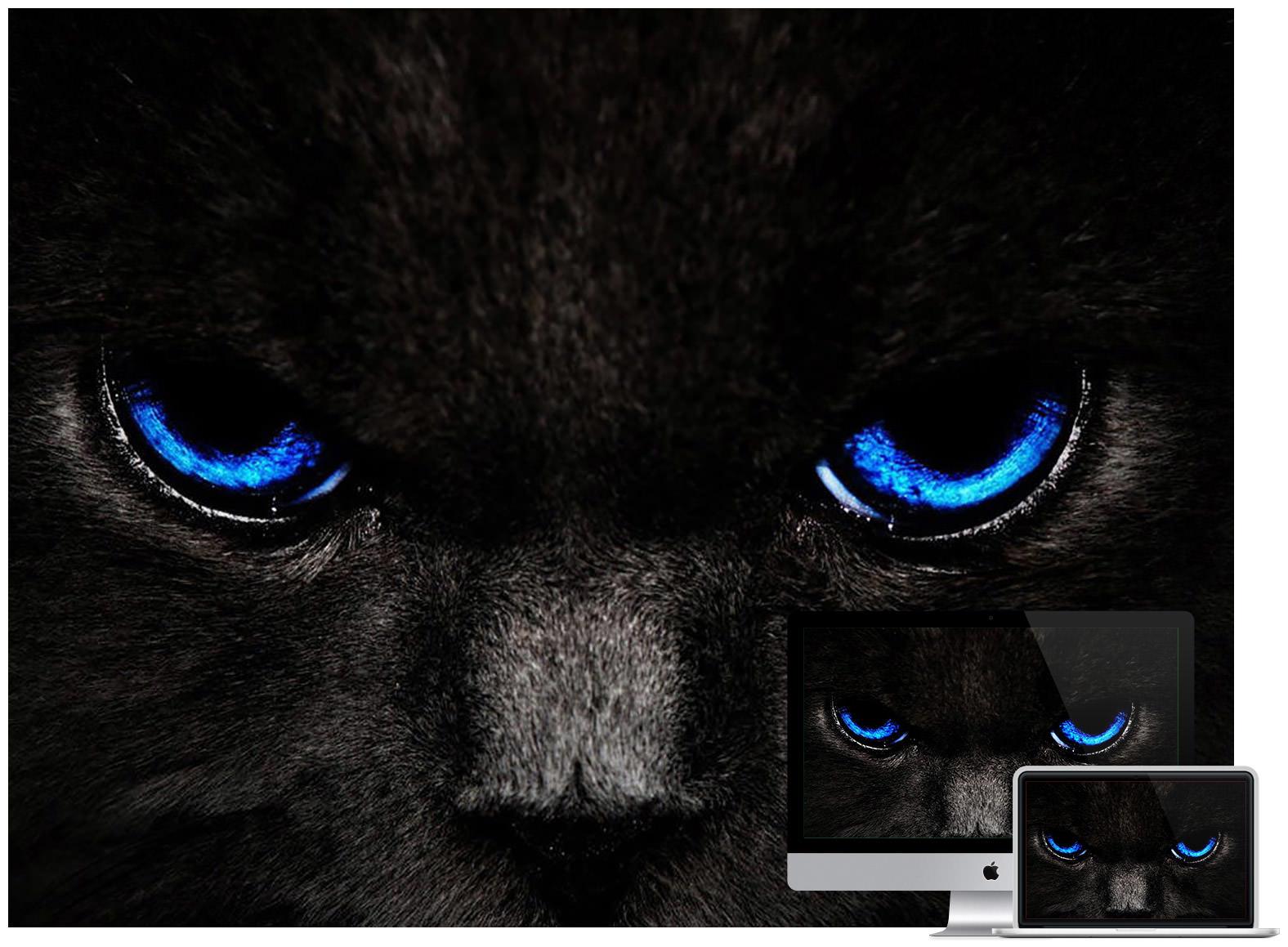 284 2849358 dark cat wallpaper black cat wallpaper 4k