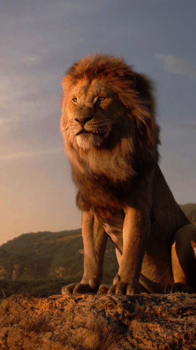 The Lion King, Hd - Iphone Lion King Wallpaper Hd , HD Wallpaper & Backgrounds