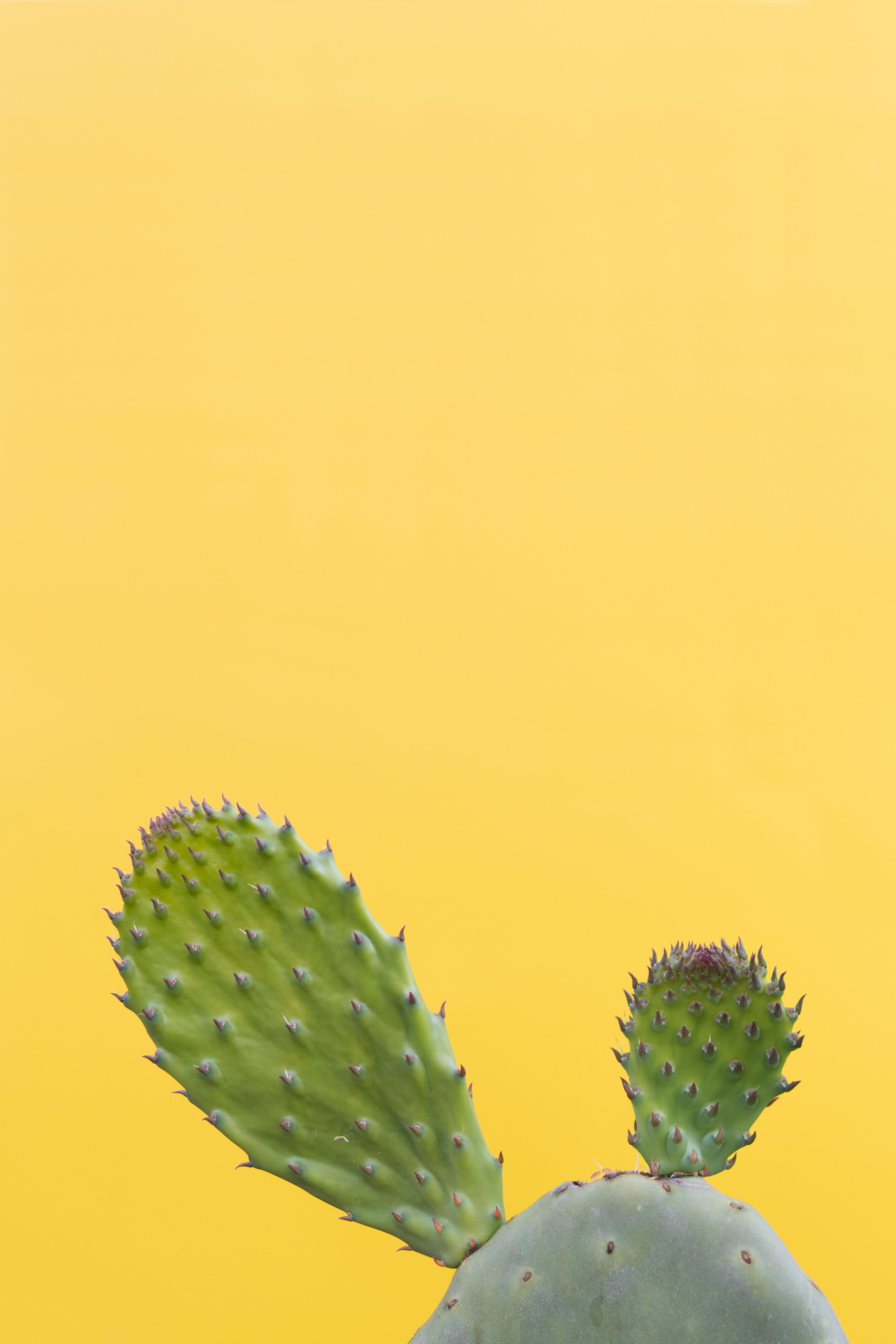 Wallpaper Cactus Succulent Prickly Green Minimalism Minimalist Phone Wallpaper Succulent 2872280 Hd Wallpaper Backgrounds Download