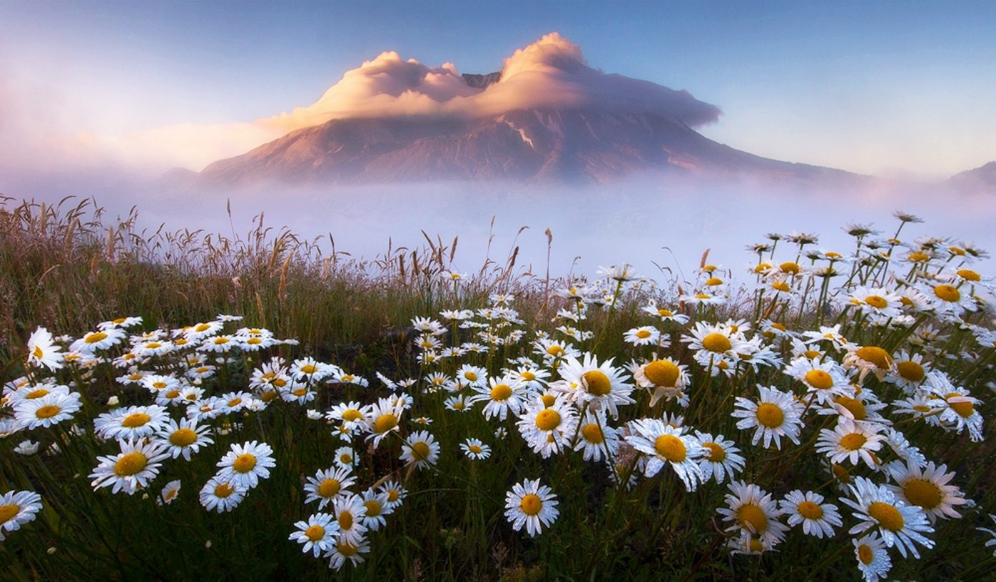 Flower , HD Wallpaper & Backgrounds
