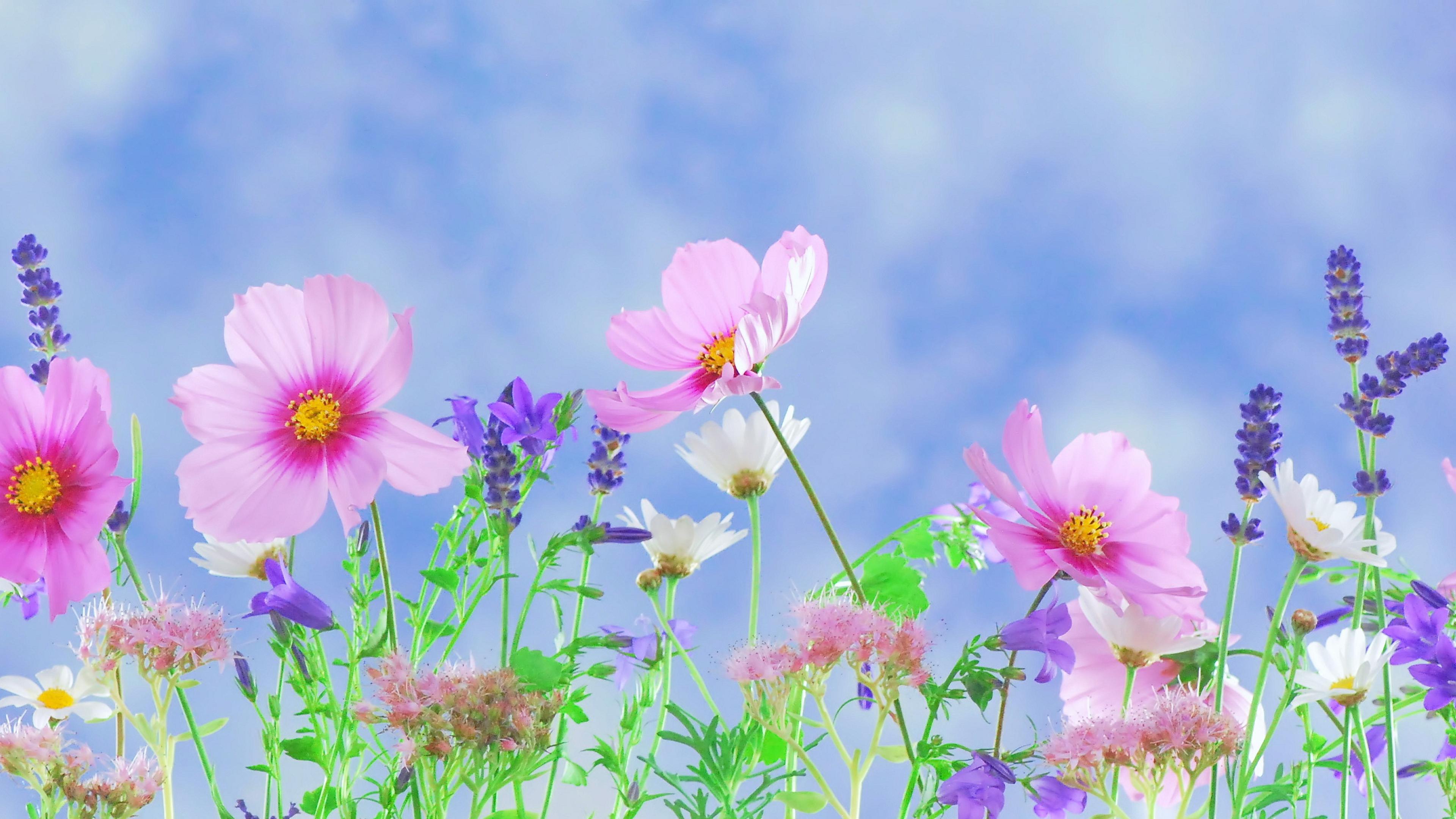 Summer Floral Desktop Background , HD Wallpaper & Backgrounds