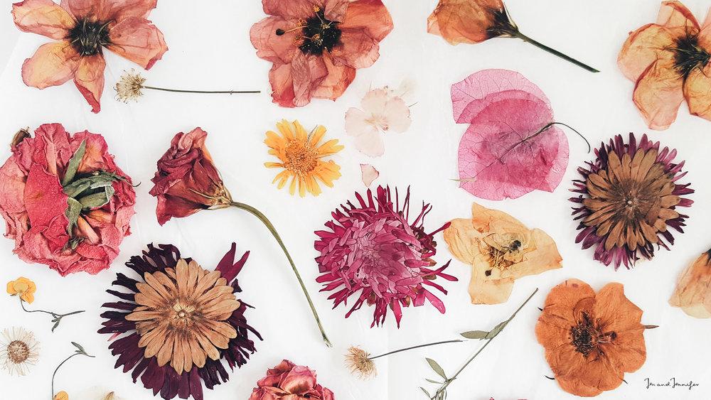 Pressedflowers Jenandjennifer Desktop Wallpaper - Pressed Flowers Wallpaper Desktop , HD Wallpaper & Backgrounds