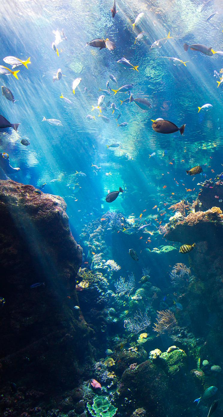 288 2888316 underwater water marine biology organism coral under the