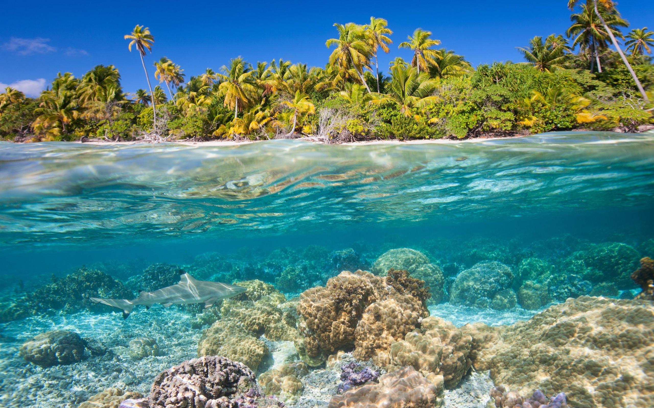 Tropical Islands, Underwater World, Corals, Shark, - Beach Underwater High Resolution , HD Wallpaper & Backgrounds
