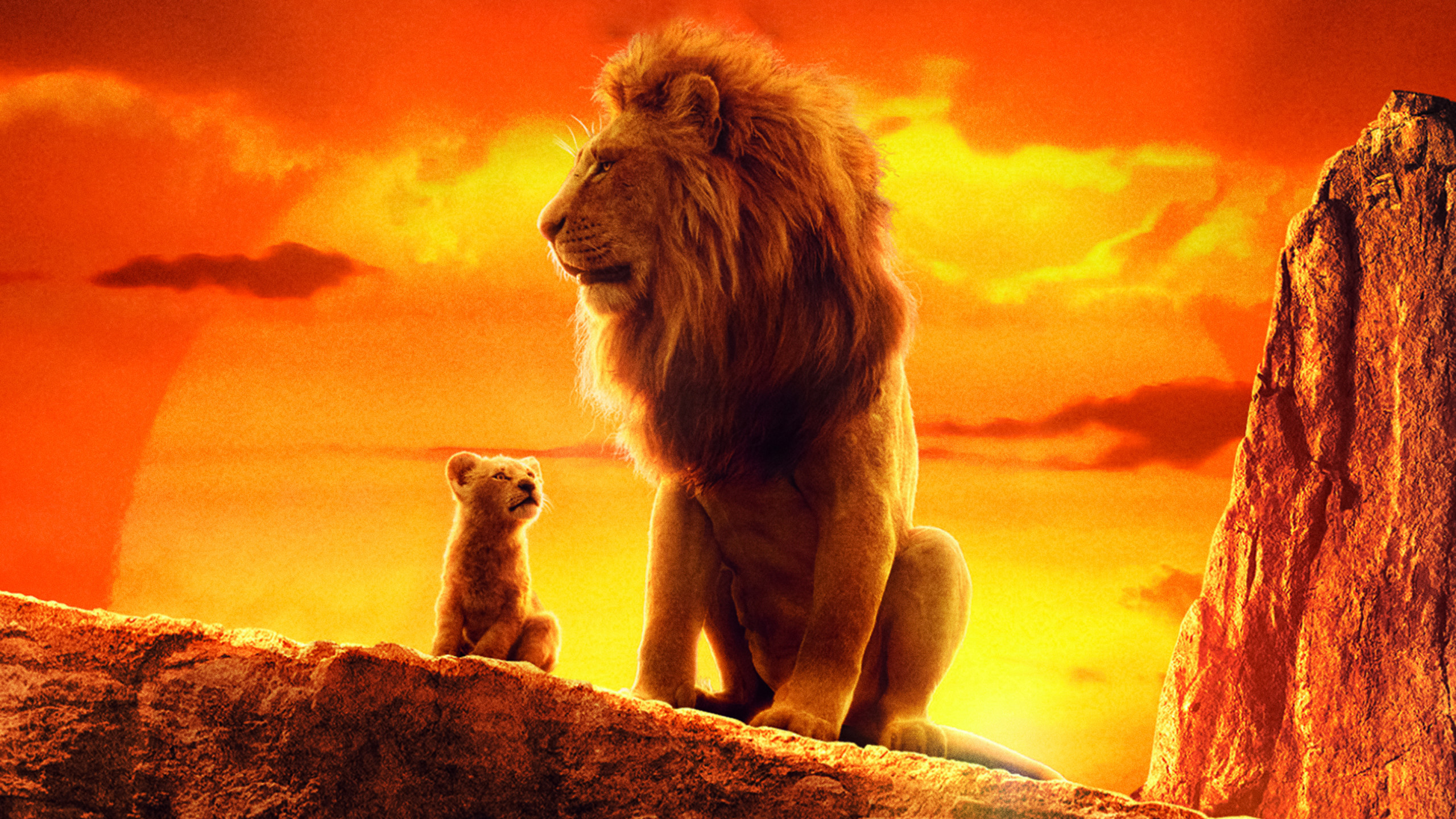 Lion King Wallpaper 4k , HD Wallpaper & Backgrounds