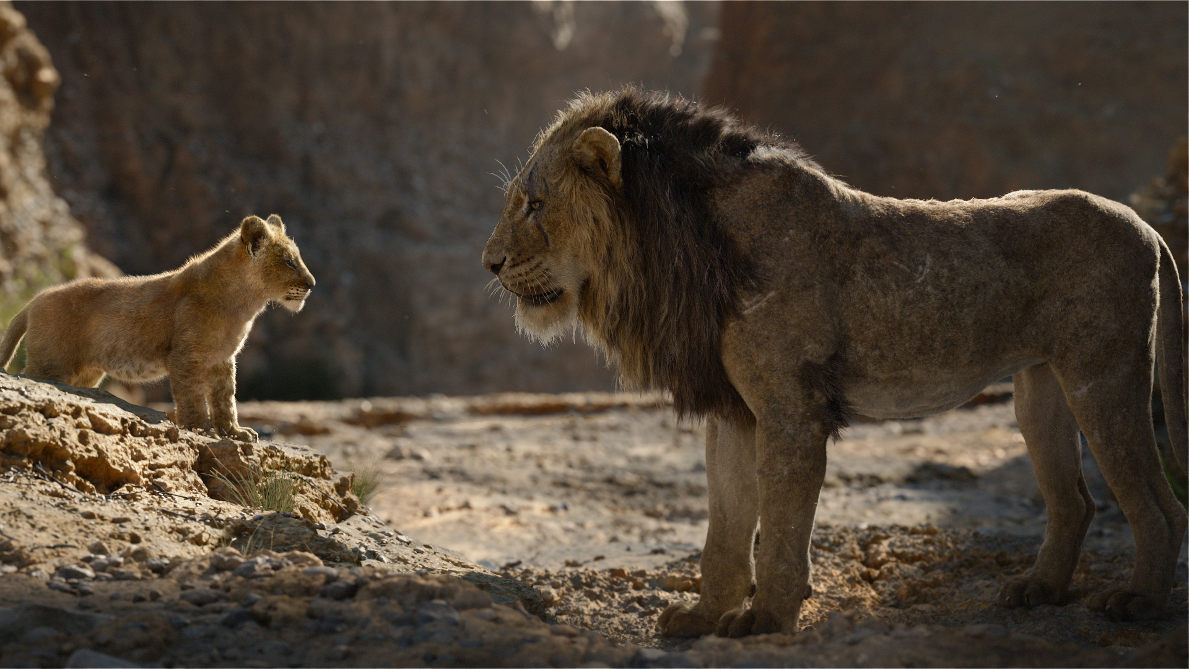 The Lion King Film 4k Wallpaper - Lion King Mufasa 2019 , HD Wallpaper & Backgrounds