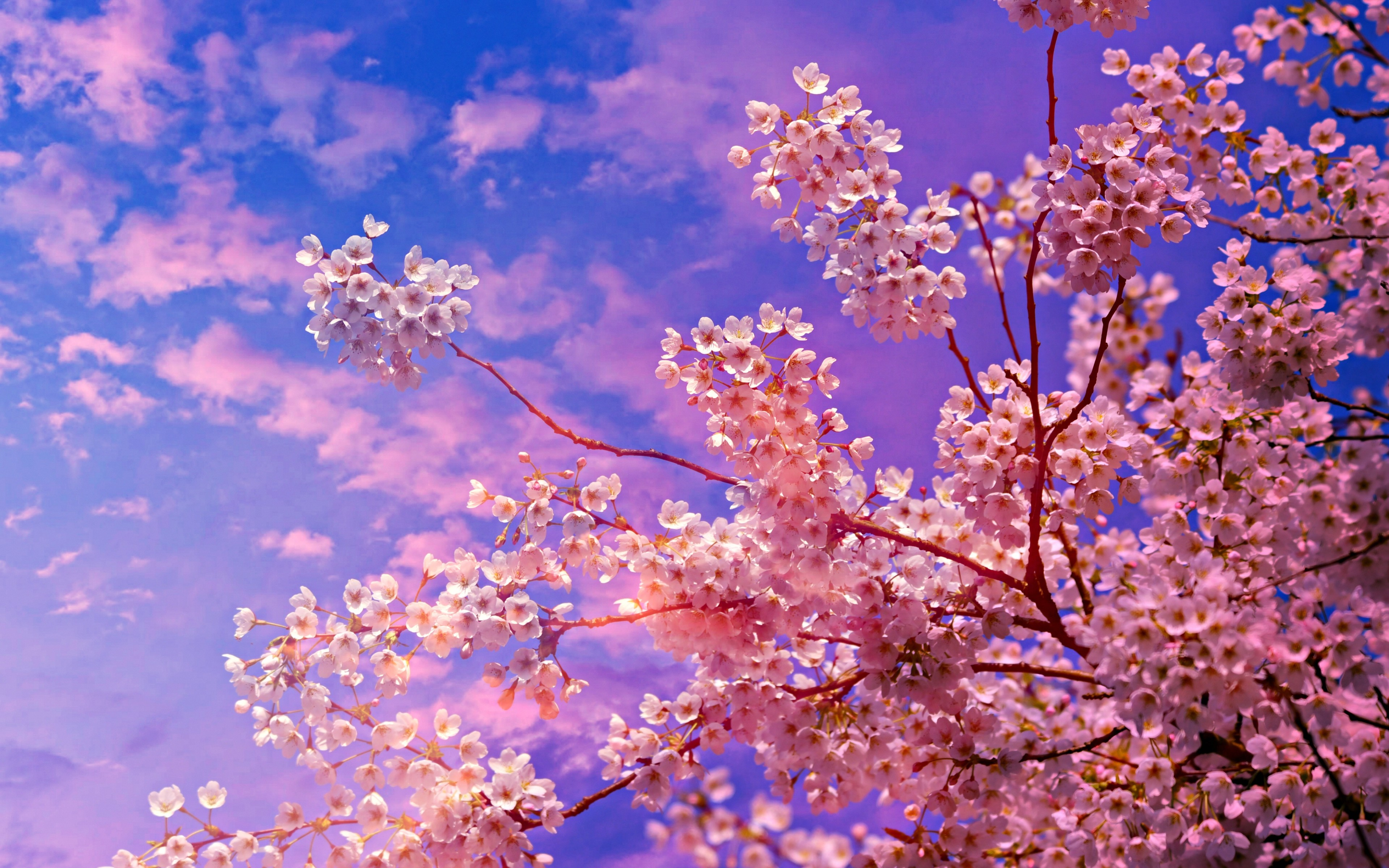 Cherry Blossom Tree Background Hd , HD Wallpaper & Backgrounds