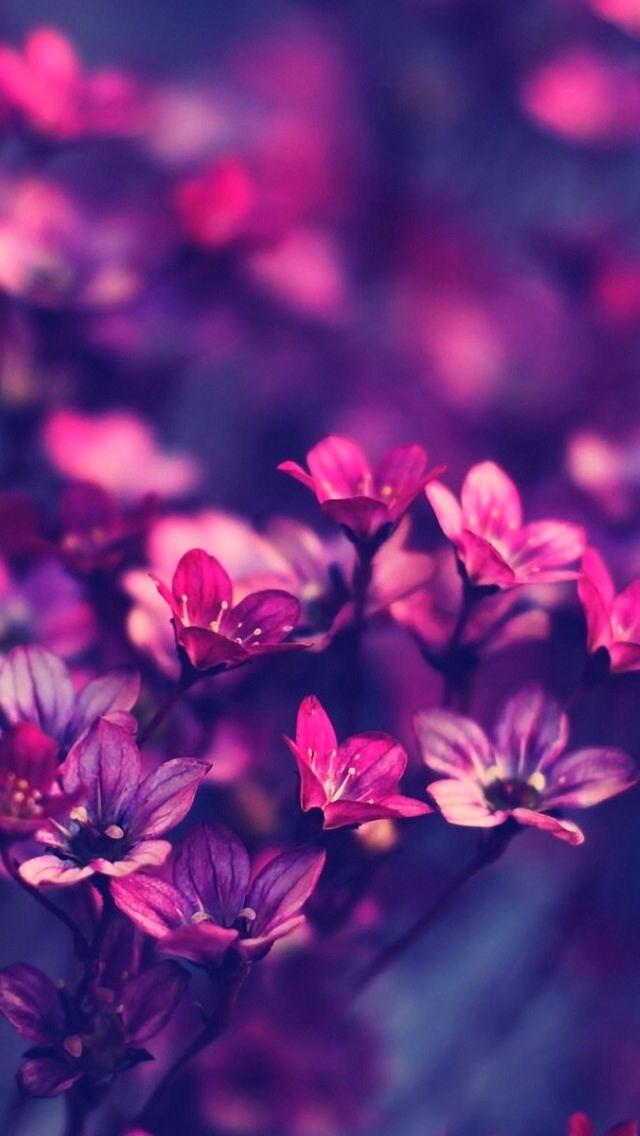 Hd Nature Love Wallpaper Download For Android Flower - Flower Hd Wallpapers For Iphone , HD Wallpaper & Backgrounds