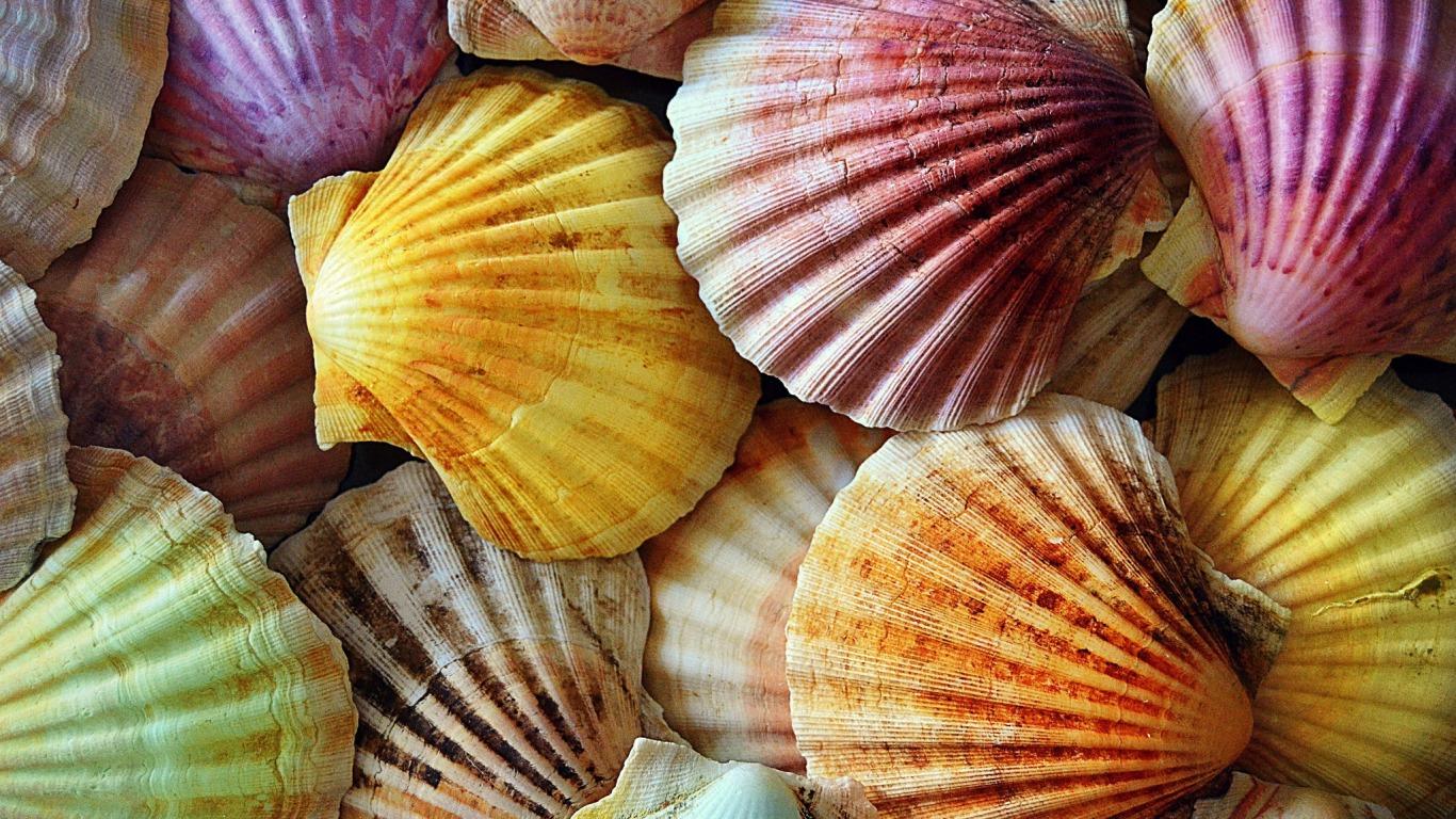 Shells Wallpaper Seashells Wallpaper Collection Most - Cool Seashells , HD Wallpaper & Backgrounds