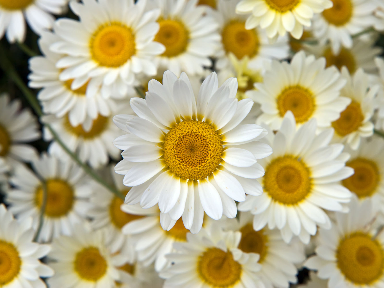 29 296487 download flower background tumblr wallpaper white and yellow