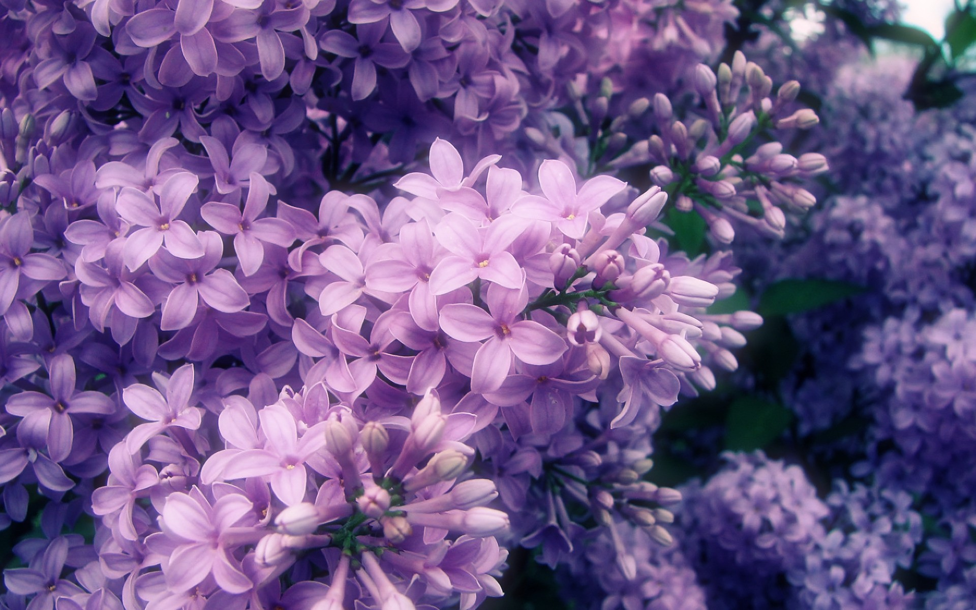 Light Purple Flowers Tumblr Purple Flowers Aesthetic 297189 Hd Wallpaper Backgrounds Download