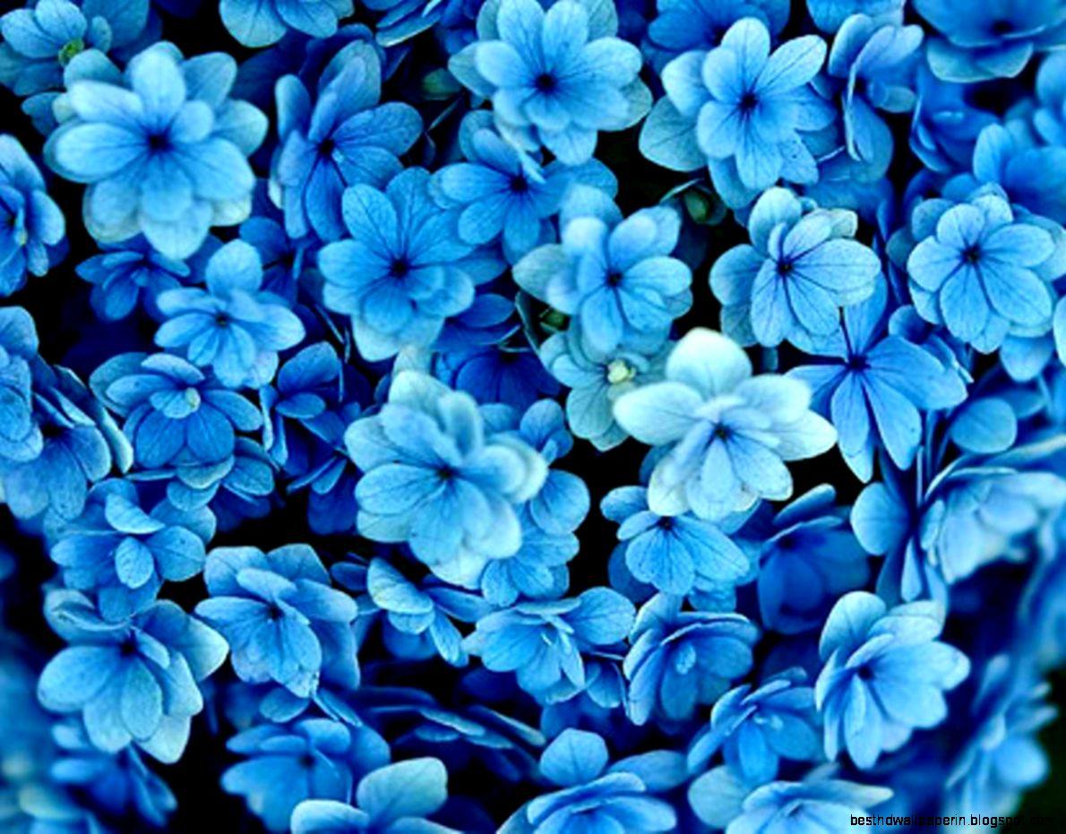 Incredible Blue White Wallpaper Tumblr Blue Flowers