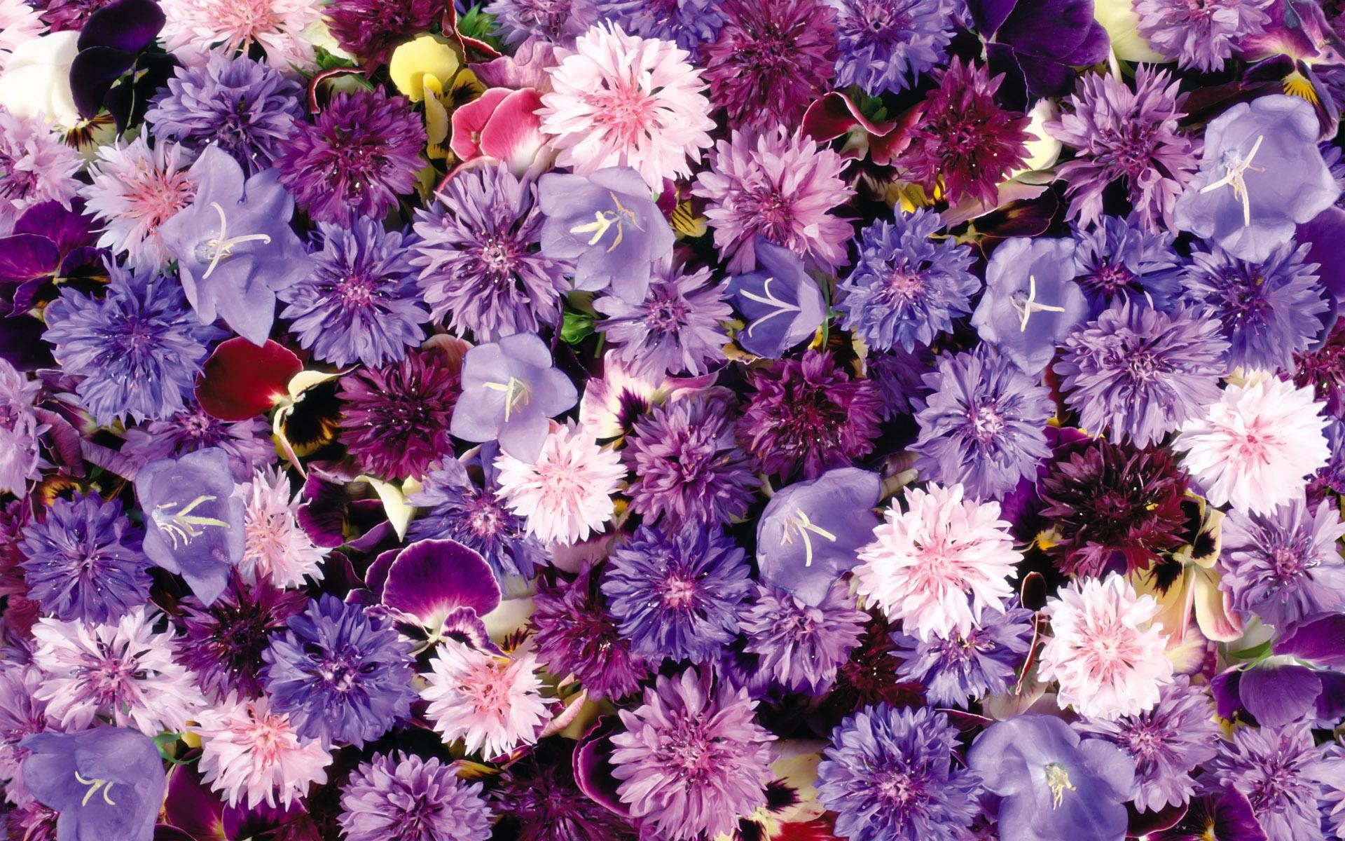 Full Hd Of Lots Violet Flowers Screen Wallpaper Flower Flower Aesthetic Purple Background 297522 Hd Wallpaper Backgrounds Download