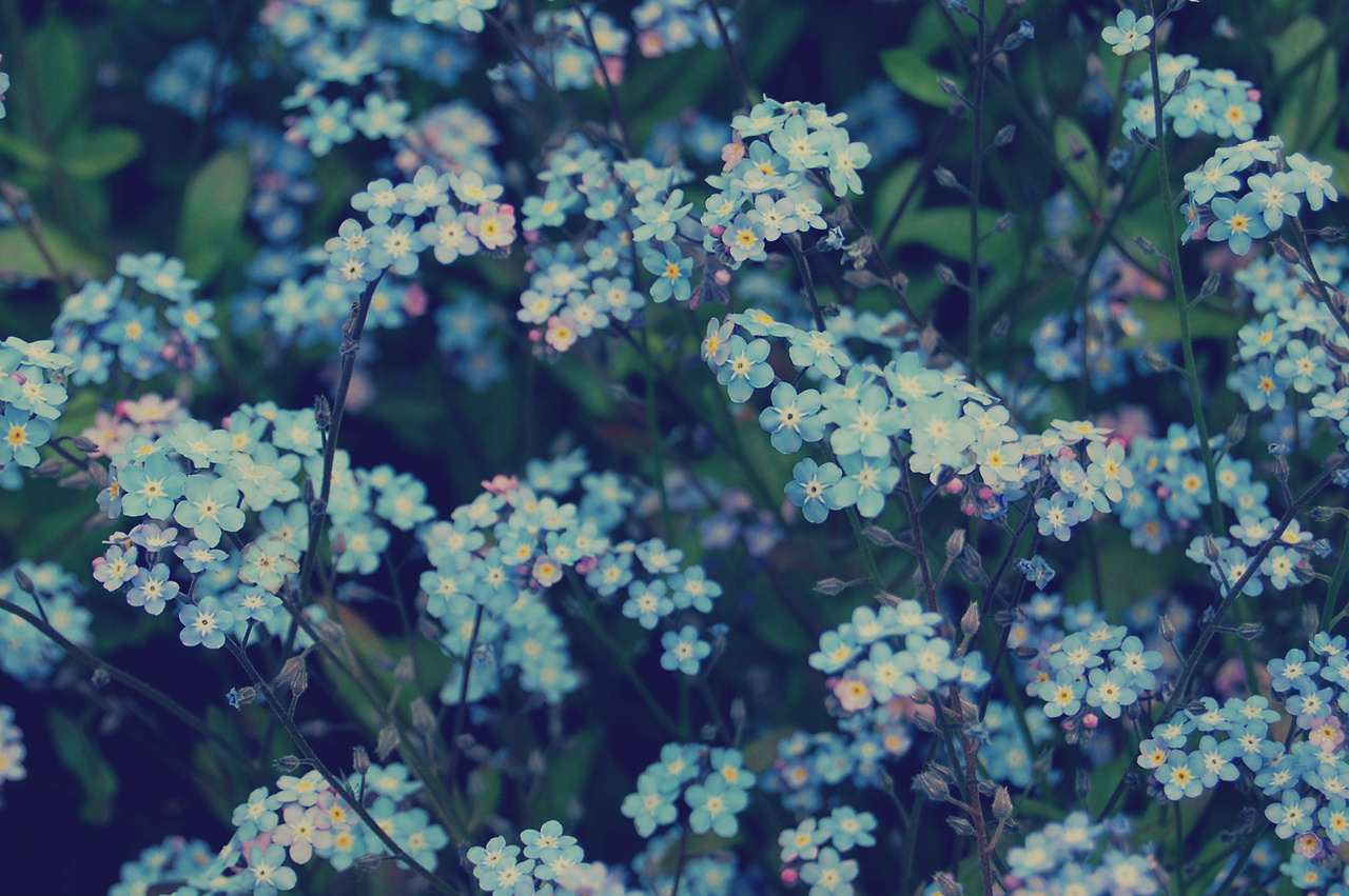 29 297623 flowers tumblr