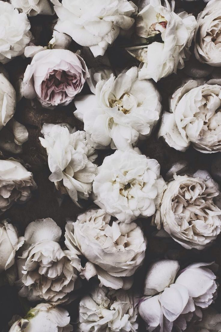 Cute Spring Wallpapers For Computers Tumblr Faded Flowers
