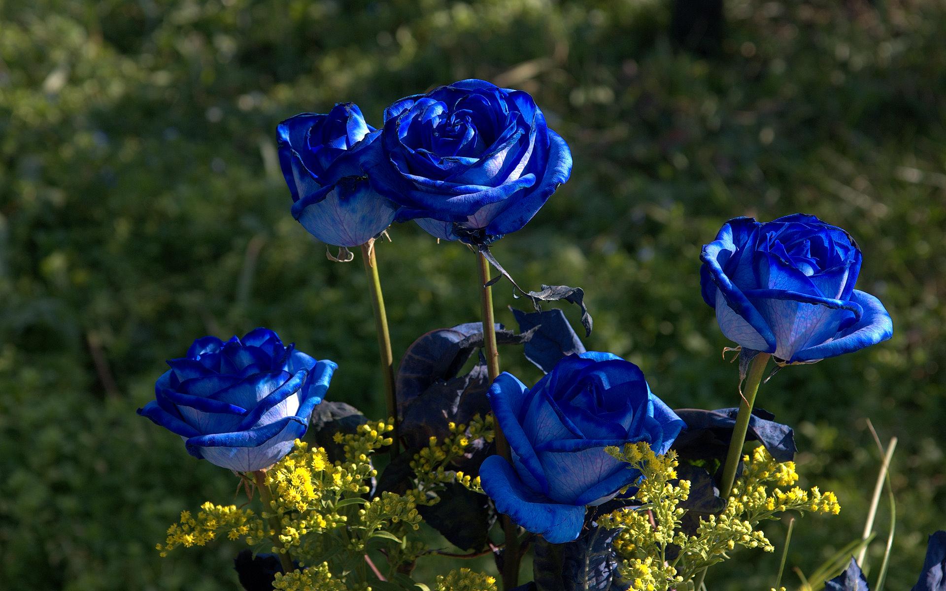 Tumblr Wallpaper Flowers - Most Beautiful Blue Rose Hd , HD Wallpaper & Backgrounds