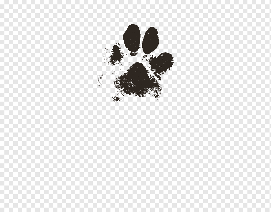 Dog Puppy Paw Cat Pet Dog Animals Paw Computer Paw Print Real Dog 2903585 Hd Wallpaper Backgrounds Download Upload only your own content. dog puppy paw cat pet dog animals