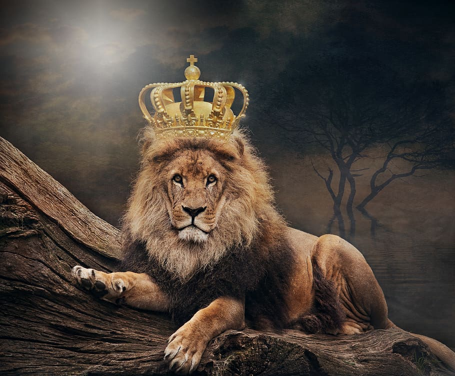 King, Lion, The Lion King, Crown, Animal World, Art, - King Lion , HD Wallpaper & Backgrounds
