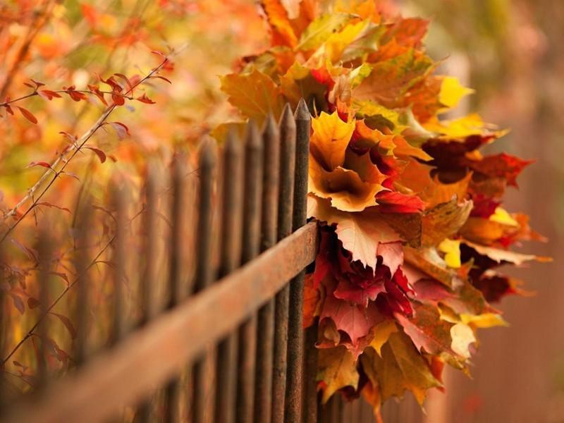 Autumn Season Wallpaper - Season Wallpaper Fall , HD Wallpaper & Backgrounds
