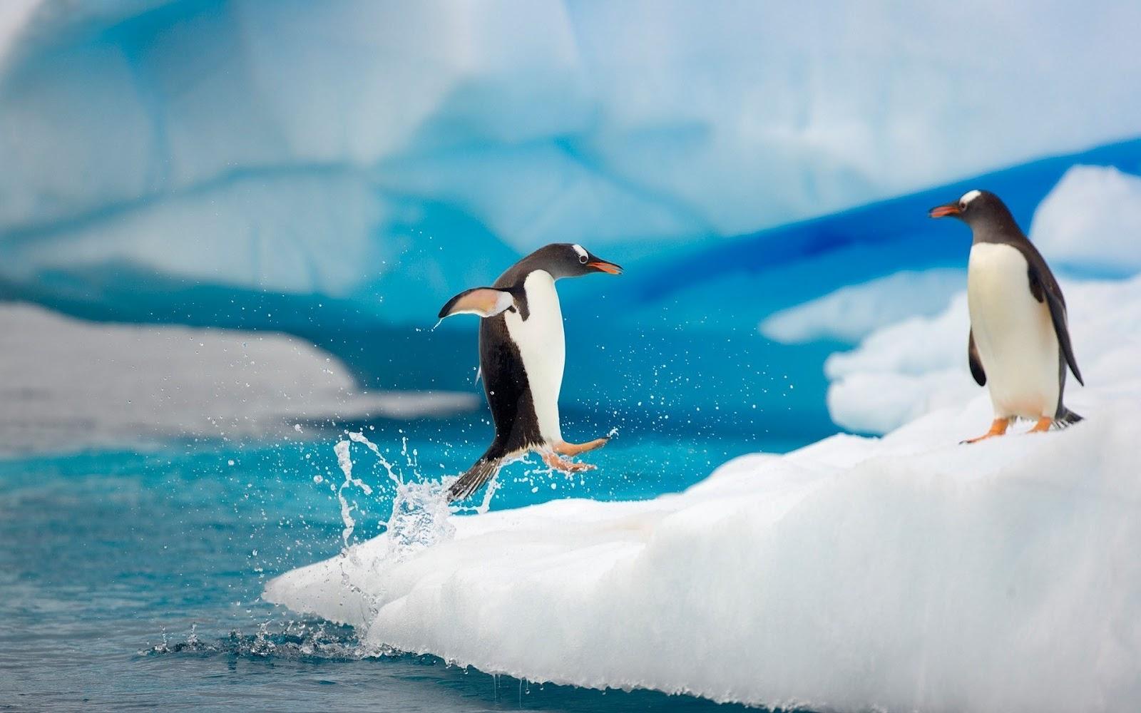 Penguin Wallpaper 4k , HD Wallpaper & Backgrounds