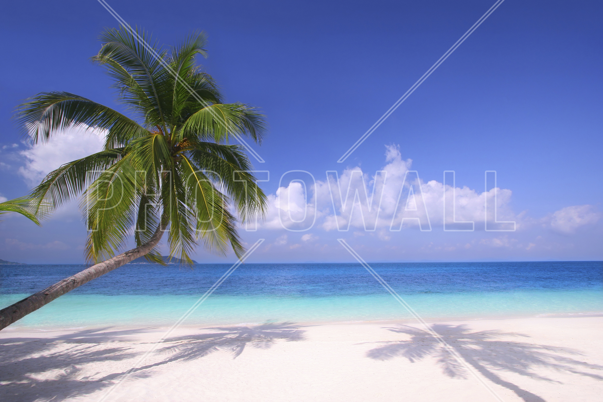 Island Paradise - Wallpaper - Coconut Tree At Beach Png , HD Wallpaper & Backgrounds