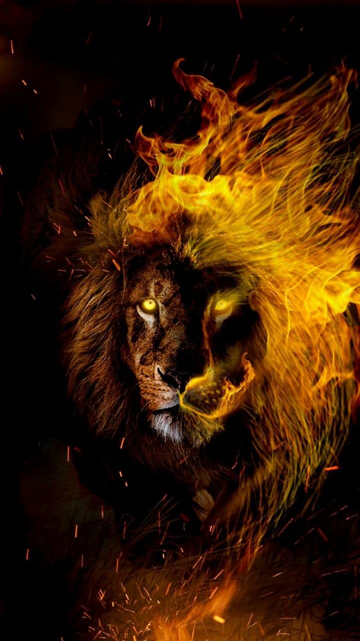 Leo Wallpaper Lion , HD Wallpaper & Backgrounds