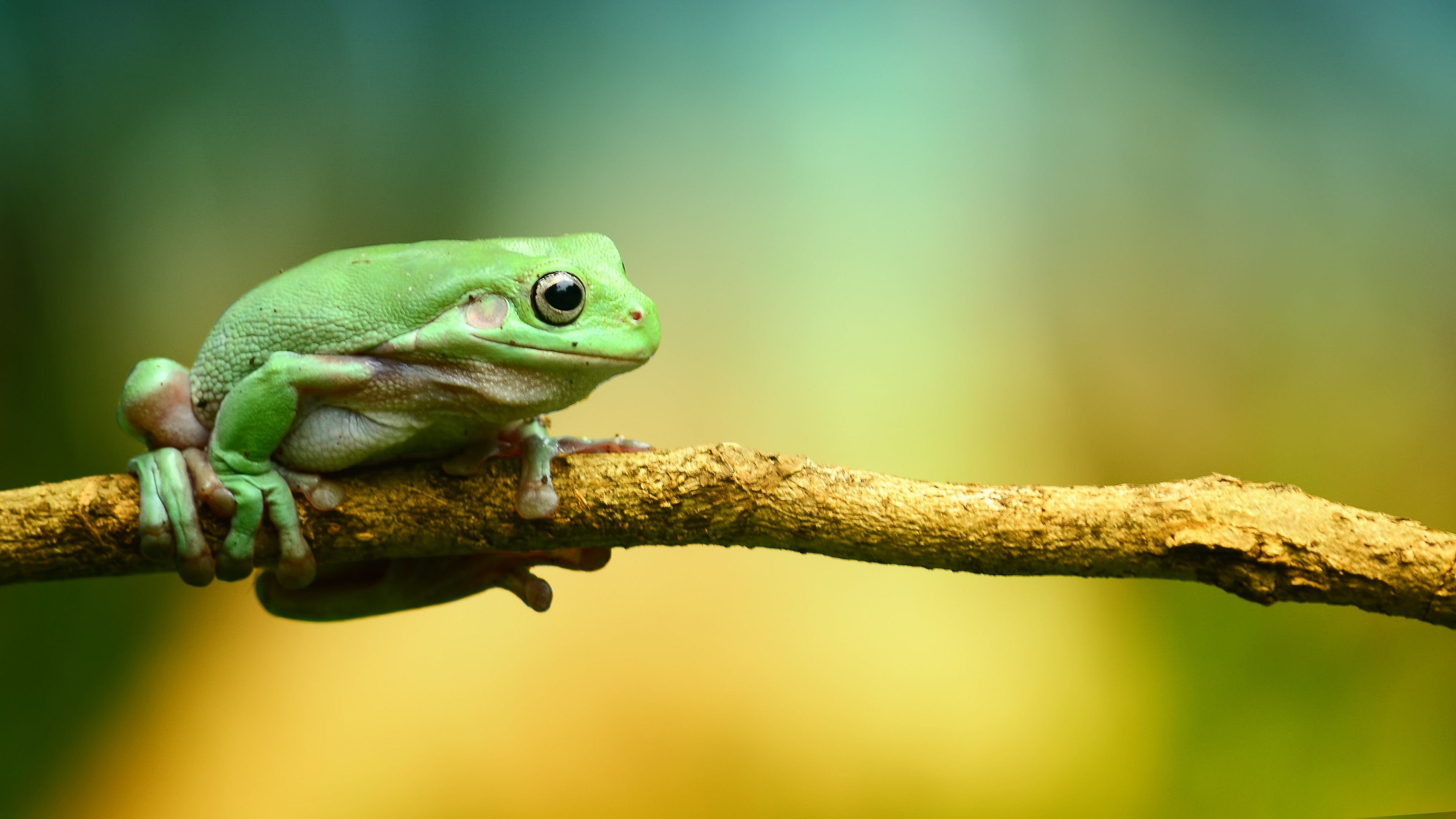 Frog Wallpaper For Computers Green Frog Background 2915281 Hd Wallpaper Backgrounds Download
