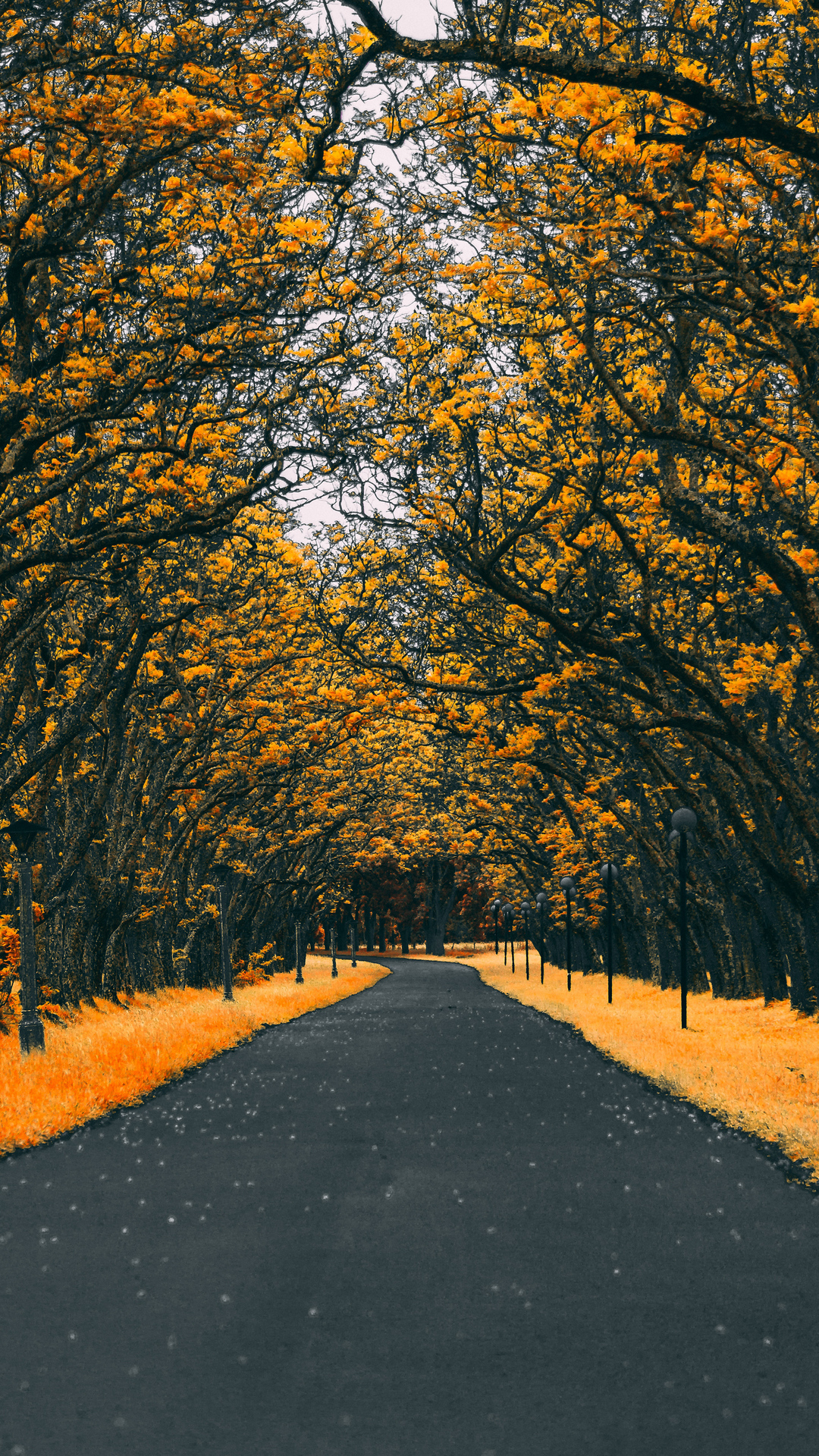 Autumn Road Nature 4k Wallpaper Orange And Dark Grey Color Palette 2934322 Hd Wallpaper Backgrounds Download